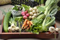 organic_vegtables_tray.jpg